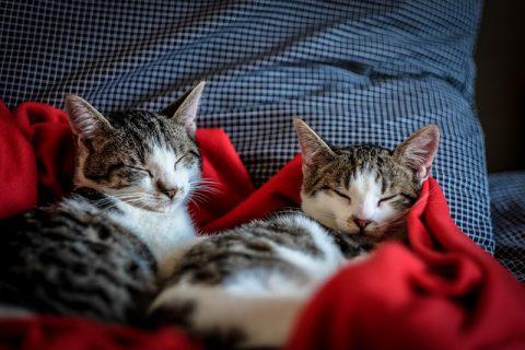 cat-2558476_640